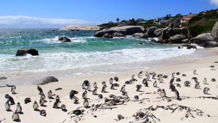 Découverte Afrique du Sud 2