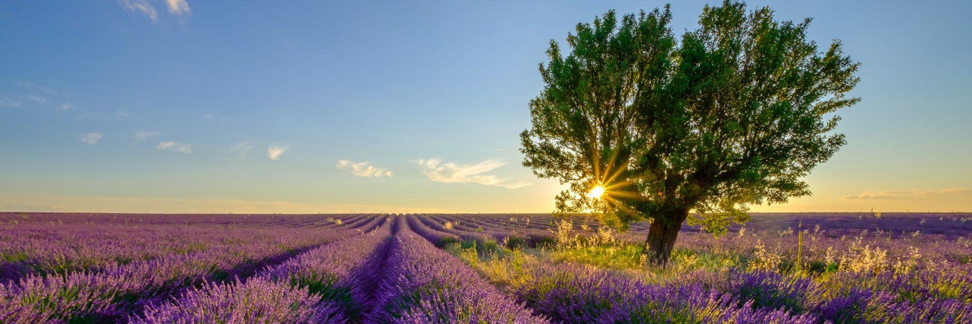 Route du Thalys soleil